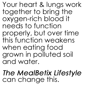 Your heart and lungs work together to bring the oxygen-rich blood it needs to function properly, but over time this function weakens when eating food grown in polluted soil and water.   The MealBetix Lifestyle can change this.